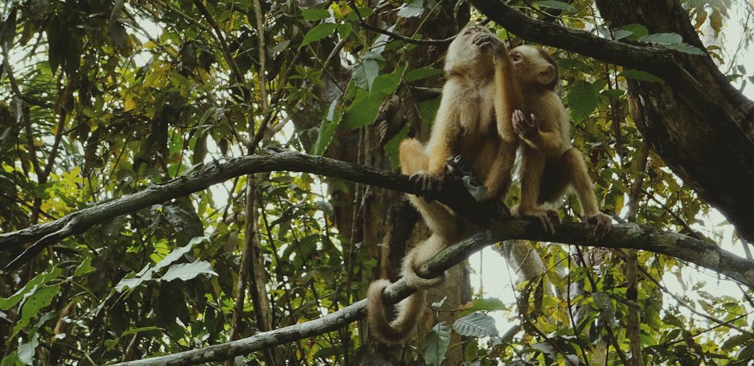 fauna-amazonas-4